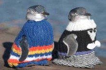 call for knitted sweaters for penguins affected by oil spill