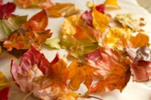 how-to: preserve autumn leaves with melted beeswax