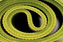 anitbacterial yoga mat spray