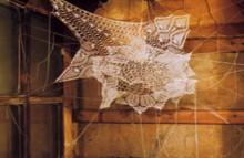 shane waltener: lace webs