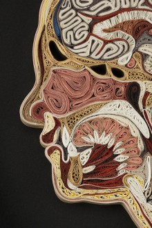 anatomical cross-sections made from paper