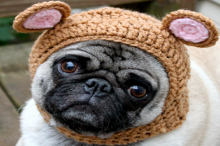 pickles the pug crochet hat model