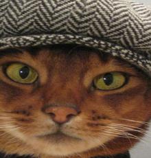 toki nantucket the cat hat etsy model